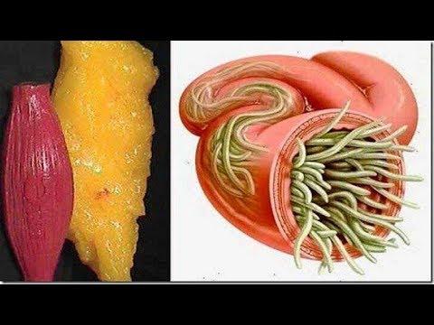 تخلصي من كل الدهون والطفيليات في جسمكم مع الليمون والكرفس
