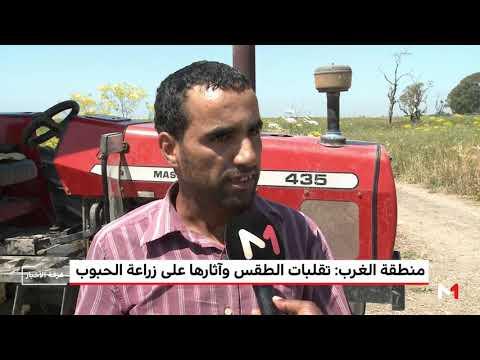 شاهد تقلبات الطقس وآثارها على زراعة الحبوب في منطقة الغرب