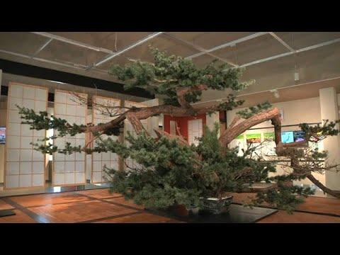 حدائق اليابان المسحورة في معرض بكين الدولي