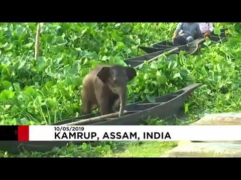 إنقاذ صغير فيل من الغرق داخل بحيرة في الهند