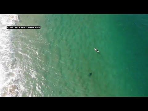 تنبيهات من طائرة بدون طيار تنقذ سبّاحًا من هجمة قرش وشيكة
