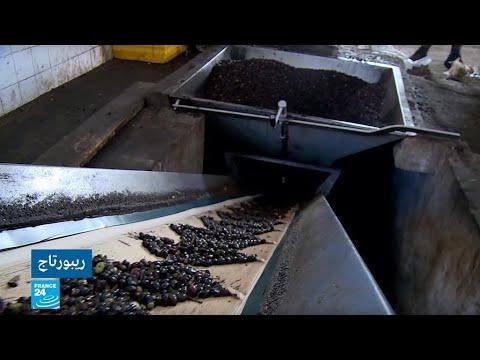 منظمة فاو تكشف أن ليبيا تحتل المرتبة 11 عالميا في إنتاج الزيتون