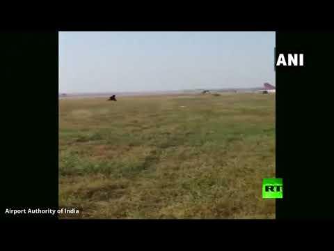 شاهد مطار في الهند يلجأ لطريقة طريفة تبعد القرود عن مدرج الطائرات