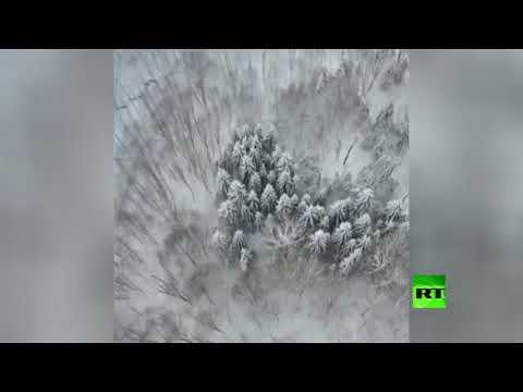شاهد لقطات جوية للغابات المغطاة بالثلوج في إيران