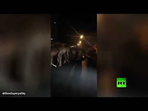 شاهد إجلاء آلاف الجمال من ميناء طرابلس في ليبيا