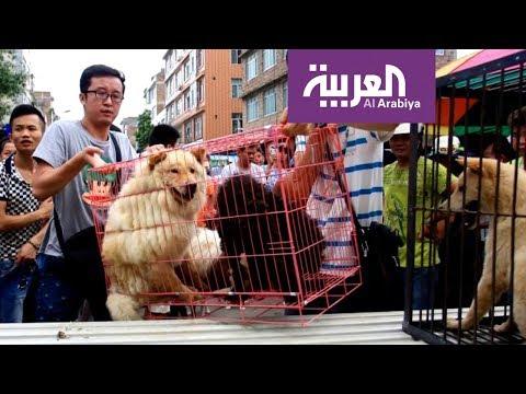 شاهد مدينة صينية تتجه لحظر تناول القطط والكلاب