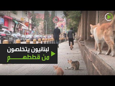شاهد اللبنانيون يهجرون حيوانتهم الأليفة خوفًا من الإصابة بـكورونا