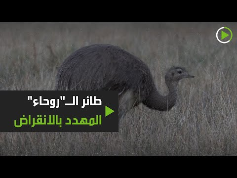 إطلاق سراح 14 من الطيور المهددة بالانقراض