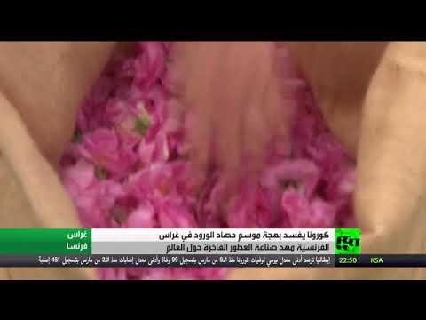 شاهد كورونا تفسد بهجة قطف الزهور في غراس الفرنسية