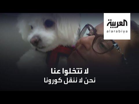 عيادة بيطرية في القاهرة تتبنى مبادرة إنسانية لحماية الحيوانات
