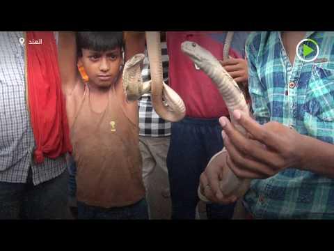 شاهد الأفاعي تُزين طقوس ناج بانتشامي الهندوسية في الهند