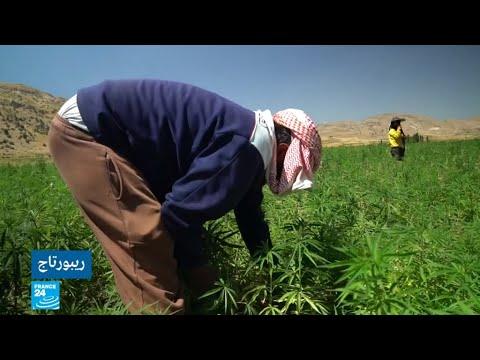 شاهد زراعة الحشيش في لبنان بين السر والعلن بعد تقنينه من قبل البرلمان