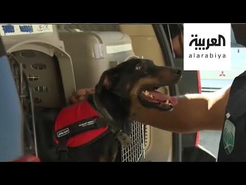 شاهد كلاب مدربة للكشف عن مصابي كورونا في السعودية