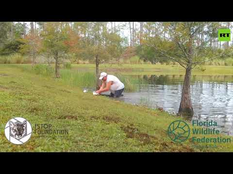شاهد أميركي يصارع تمساحًا في فلوريدا لإنقاذ كلبه الصغير