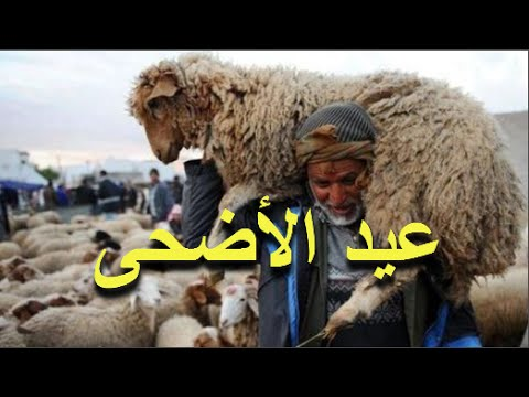 العرب اليوم - فيديو فلكي مغربي يبشر المغاربة بموعد عيد الأضحى في المغرب لسنة 2016