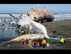 فلسطين اليوم - بالفيديو  أكبر 10 حيوانات وجدت على الشاطئ