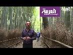 فلسطين اليوم - شاهد المكان المفضل لنزهة نبلاء اليابان