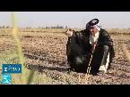 شاهد مزارعون عراقيون يُحذِّرون من اختفاء أرز العنبر بشكل كامل